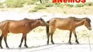 Male horse trying to have sex