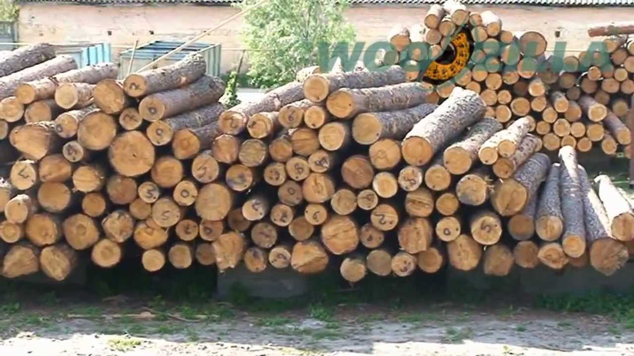 Exports of round wood logs pine from Ukraine