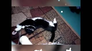 Кошка помогает в вязании амигуруми... /  The cat plays with threads.
