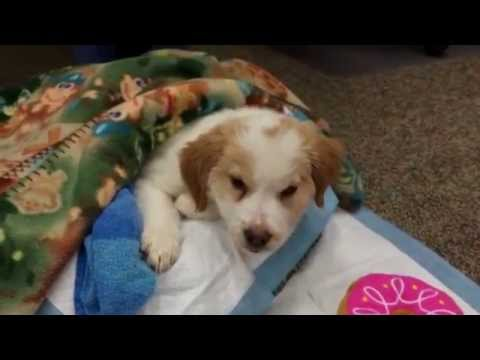 Dog Rescue Tries To Save Pup Journey The Puppy Dies Of Pneumonia