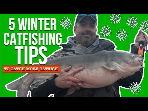 Five Winter Catfishing Tips (To Catch More Catfish)