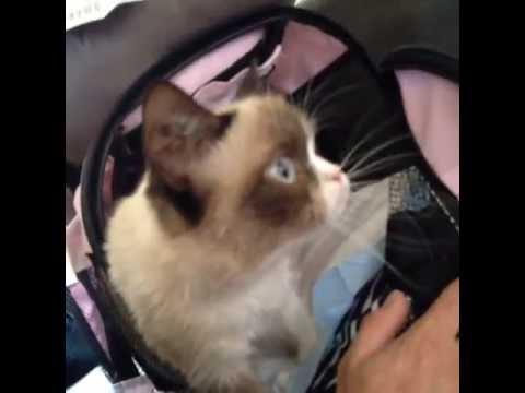 Grumpy Cat Says Meow