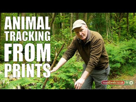 Animal Tracking from Prints