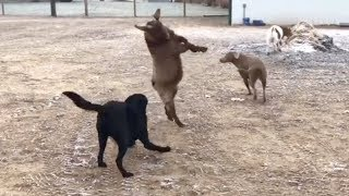 The FUNNIEST ANIMALS, you'll LAUGH ALL DAY! - BEST of 2019