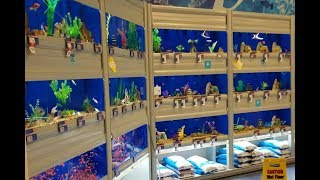 Đi Mua Cá 7 Màu SUN BURN Và Cá La Hán giá Rẻ | Thử Vận May Với Tiệm Cá Cảnh Gần Nhà