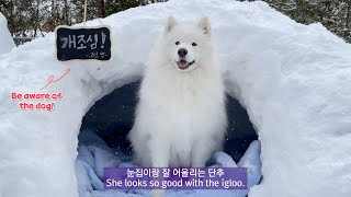 We made an igloo for a sled dog... Amazing