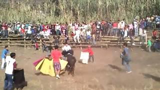 fiestas de pangua