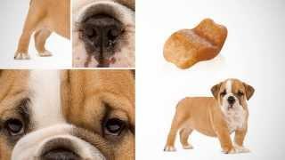 роял канин корм для собак Royal Canin (Petonly.ru)