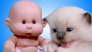 Котята развивающее видео для детей с котиками. Мультфильмы для малышей. Дочки матери для девочек