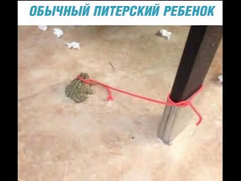 САМЫЙ СМЕШНОЙ МЕМ В МИРЕ №8 - YouTube