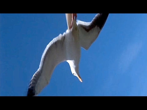 Musique+Cinéma : Jonathan Livingston Seagull - Be /Neil Diamond (Lyrics)