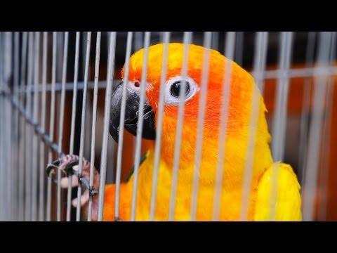 How to Travel with a Bird | Pet Bird