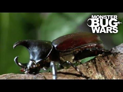 Brutal Beetle Battles | MONSTER BUG WARS