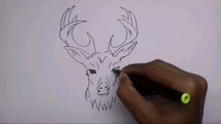 How to draw a gazelle deer (Tribal)