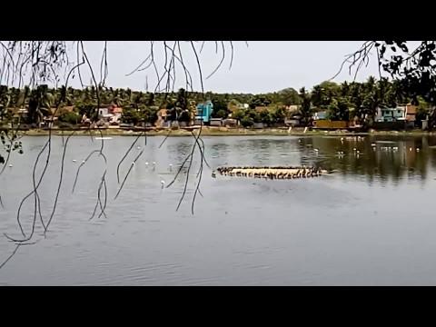 vacation travel guide kanyakumari india susindram kulam much visited place india