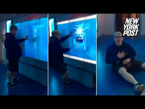 Shark-attack Prank Knocks Victim Off His Feet | New York Post
