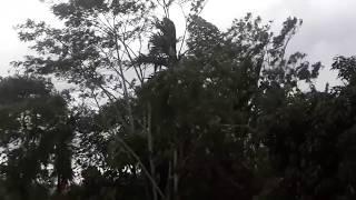 Angin Puting Beliung TERJANG Singaparna & Cipasung Tasikmalaya Jum'at Sore 07 Des' 2018