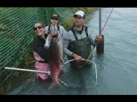 Girl kenai river king salmon fishing huge shore moose for Kenai river fish counts