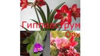 Цветущие комнатные растения ФОТО+НАЗВАНИЕ