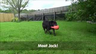 Jack the dog, available for rehoming at Blue Cross Northiam