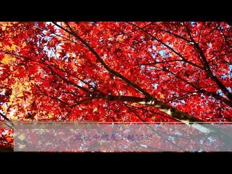 杉林溪 楓紅與水杉 11 12月