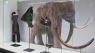 На ЖД-станции в Брюсселе выставили обновлённые кости мамонта (новости)