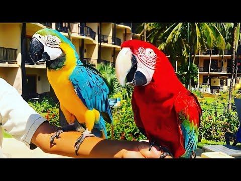 Catalonia Riviera Maya Resort & Spa | Cancun Mexico 2019 | (All Inclusive)