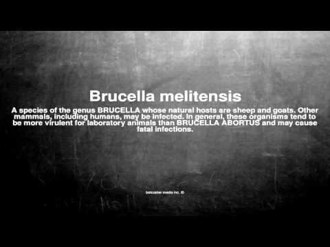 Medical vocabulary: What does Brucella melitensis mean
