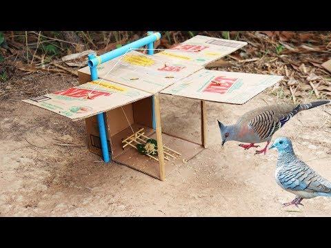 Creative DIY Quick Bird Trap - Build Bird Trap Technology Make from Blue Pipe N Cardboard
