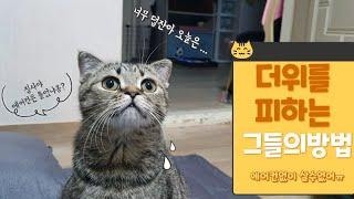 고양이7마리가 더위를 피하는 방법..
