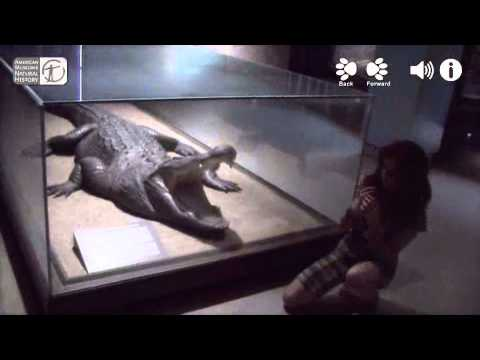Augmented Reality Demo for American Museum of Natural History