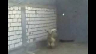 wild animal.xxx.Video from My Phone