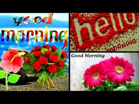 phul tumhe bheja h khat me tone (whatsapp video), good morning