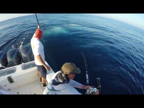 Key West Swordfishing 300lber