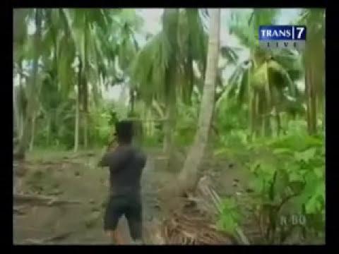 Penggerebekan Judi Sabung Ayam di Polewali Mandar