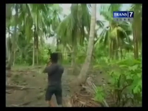 Penggerebekan Judi Sung Ayam di Polewali Mandar