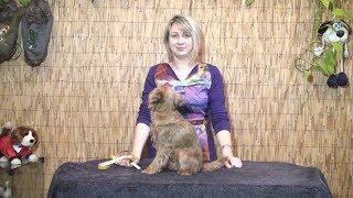 Как правильно снять мерки с собаки?