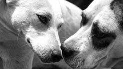 Animal hope Burgas - Animals in danger!
