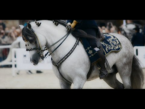How the Andalusian Horses Dance