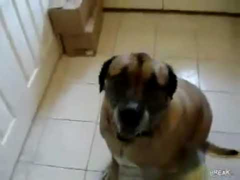 Dog Eats Bean Burrito In 1 Second 1 Hour Youtube