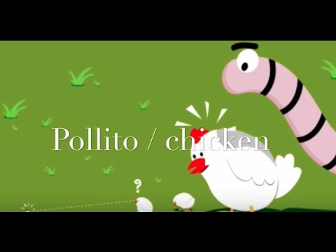 Pollito, chicken | canciones infantiles | bilingual songs