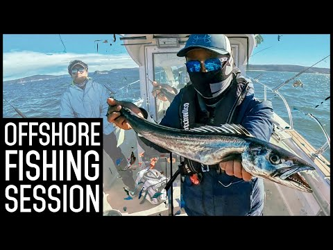 Sydney Offshore Fishing Session - Bonito, Barracuda and MORE!