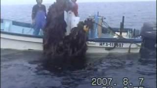 羅臼天神様 (Seaweeds Farming using Tamura Nets).wmv