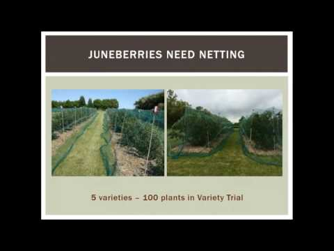 Spring Fever Garden Forum 2017: Growing Juneberries