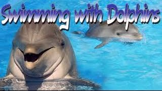Swimming with Dolphins in Curacao Dutch Antilles!