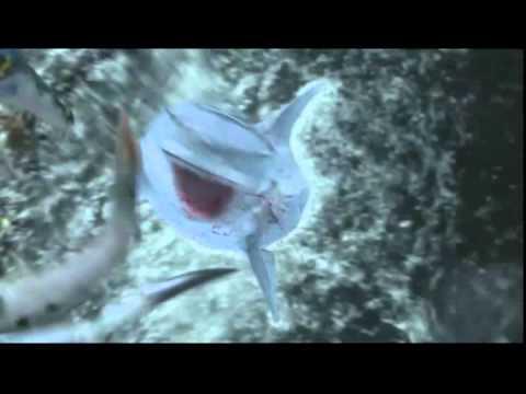 映画 『シャークトパス vs プテラクーダ』 公式予告編