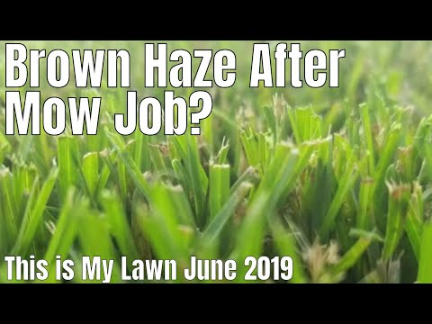 diy-how-to-fix-brown-grass.-my-grass-looks-brown-after-i-mow.-brown-haze-after-i-mow