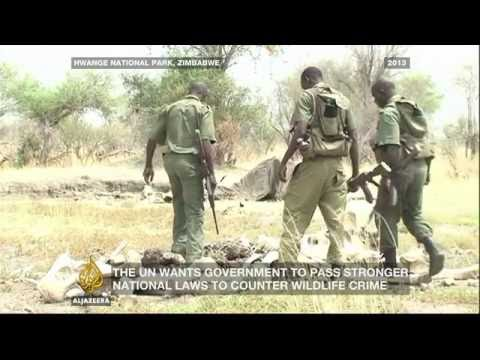 Inside Story - Who is gaining from illegal wildlife trade? Mp3