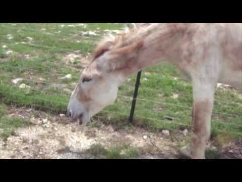 how to tell if your mare is in heat