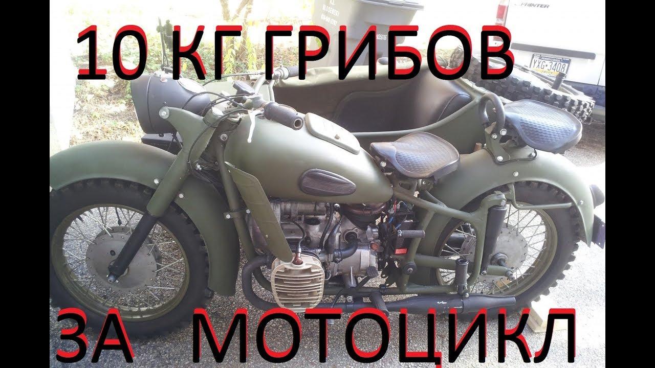 Купить 10 Ссср. Грибы Кг. Прокат Мотоциклов!   куплю мото мини байк